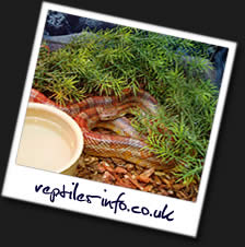 Reptiles-Info.co.uk